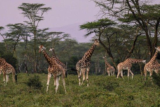 Safari di un giorno al parco nazionale