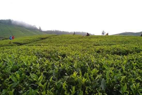 Visit Nuwara Eliya