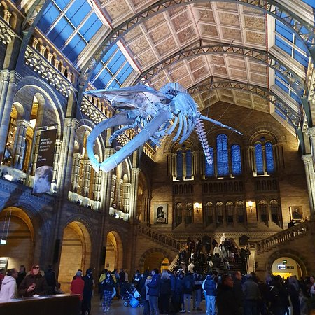 London, UK: Museo di storia naturale Londra