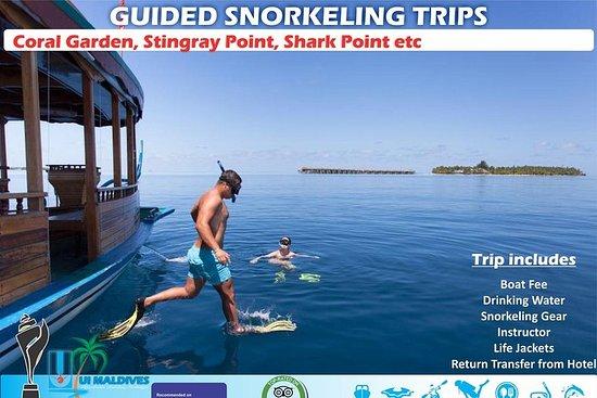 Snorkeling guidé
