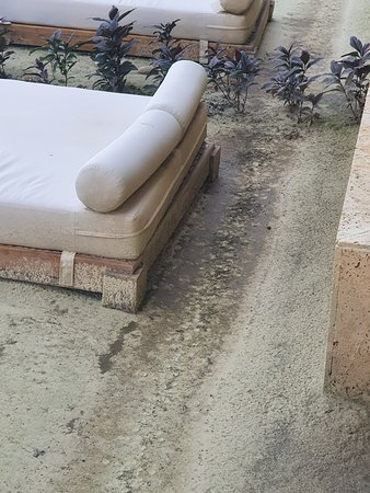 Wet day beds and dirt across front where rats run between beds and apartment