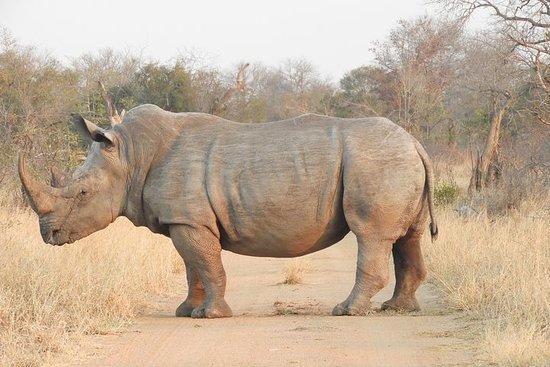 Kruger Park Wildlife Safari Tour (4 Day)