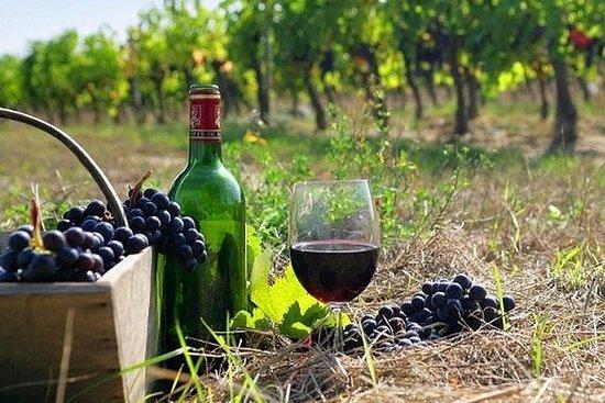 The Nemea wine roads with breathtaking...