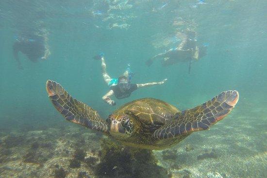 5天加拉巴哥群岛跳岛经典赛