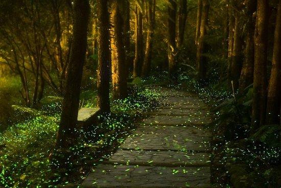 Fireflies Sanctuary, Culinary Experience,1-night at Historic Hacienda...