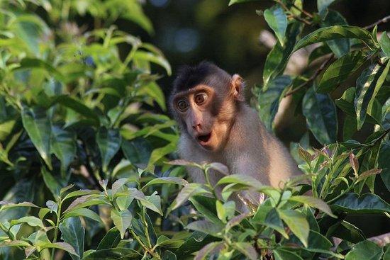Visite de la faune de Bornéo 2 jours 1 nuit au camp de la jungle de...