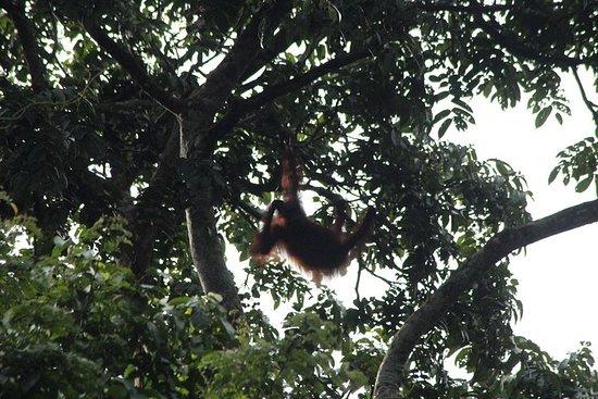 Visite de la faune de Bornéo 3 jours 2 nuits au camp de la jungle de...