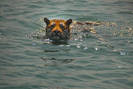 Sunderban Exotic Tiger Sanctuary Tour...