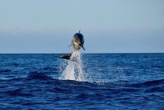 Sea Safaris Lanzarote