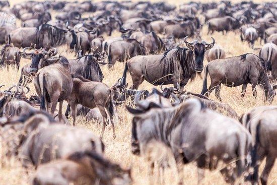 Foto 4-Day Masai Mara - Private luxury safari