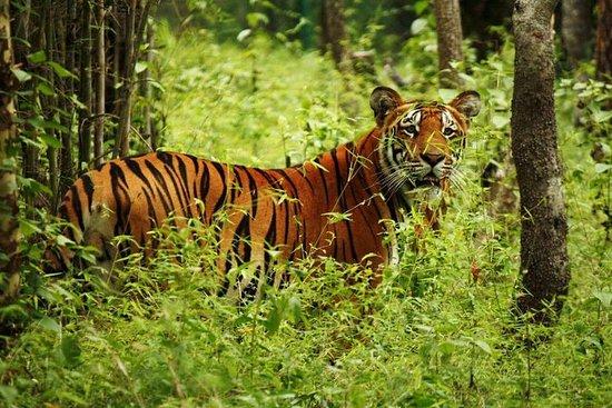Visite du parc national de Chitwan