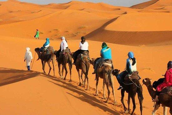 Excursão de 3 dias pelo deserto...