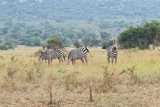 Eendaagse Akagera National Park Game ...