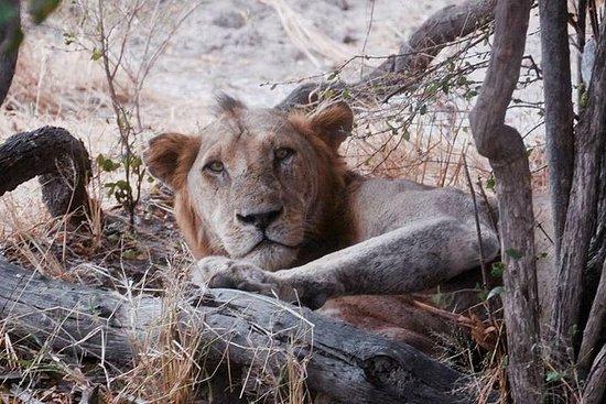 Safaris et Aventures