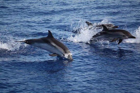 Dolphin Sighting Tour mit Schnorcheln