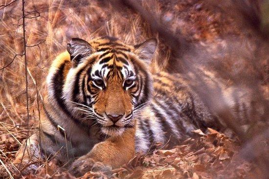 从斋浦尔到迷人的Ranthambore国家公园的全日私人旅游