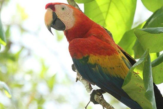 Mangrove Birding Tour