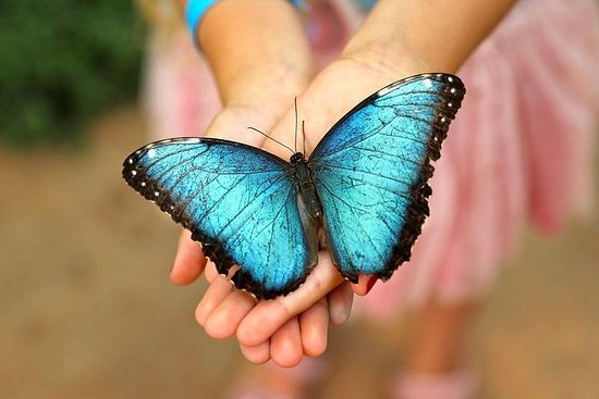 Skip the Line: Butterfly Park of Benalmadena Entrance Ticket