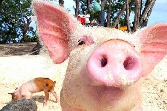 Eleuthera Natación Cerdos, Snorkel...
