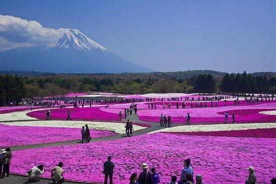 Pink Fuji Shibazakura, Besichtigung der Mt. Fuji 5th Station...