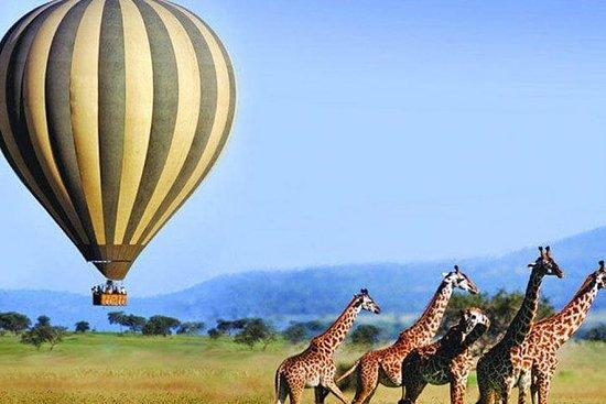 5-days Ruaha Balloon Experience and Kitulo plateau National park