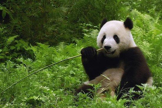北京熊貓館和頤和園私人半日遊
