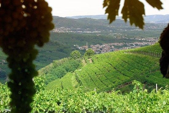 Amarone-Soave vin tur. Besøk Verona. Fra Venezia