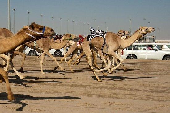 Shahania Camel Race Tour
