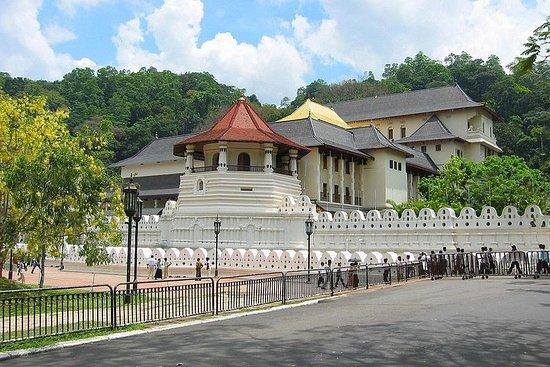 Gita di un giorno a Kandy, Pinnawala, Ape Gama, Tea Factory e