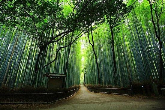 京都嵐山とS野竹のプライベートツアー(全国ライセンスガイド付き)