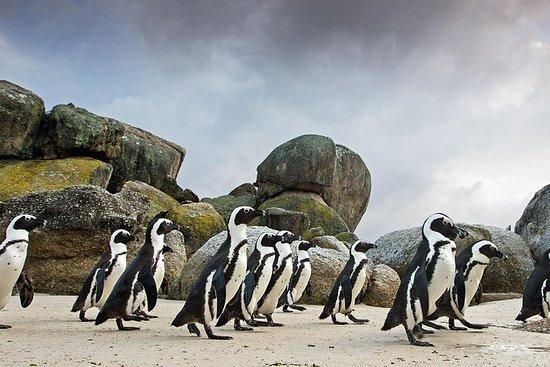 Tafelberg Ticket-Wein-Pinguine & Kap...