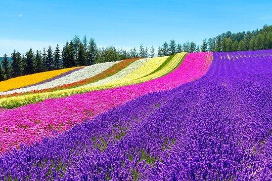 Hokkaido Høydepunkter av Blomstrende, Asahiyama Zoo & Ninguru Terrace