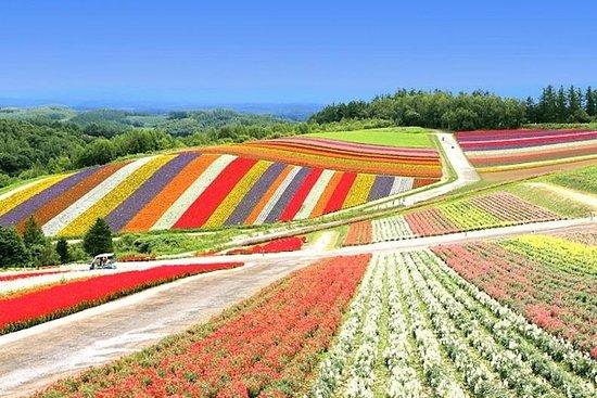 Hokkaido's Top Sightseeing of Farm Tomita, Shikisai no Oka in Biei...