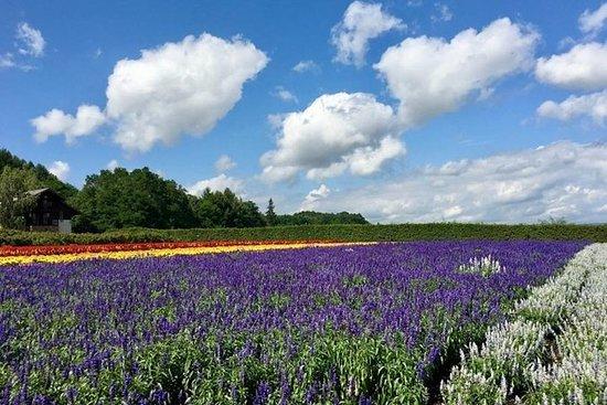 Hokkaido Blue Pond, Farm Tomita y Biei Tour en verano!