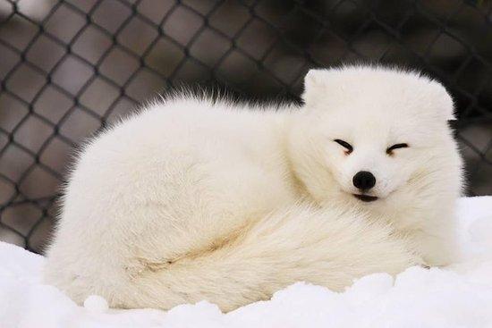 Journée au zoo d'Asahiyama et au...