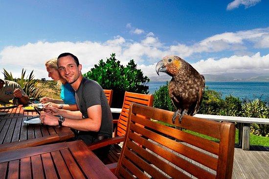 Excursão de um dia à ilha de Kapiti