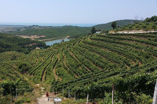 Wine, Raki & olive oil tasting day tour from Tirana