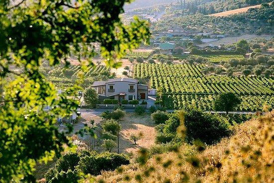 伯罗奔尼撒葡萄酒之路与纳夫普利翁和古科林斯私人游