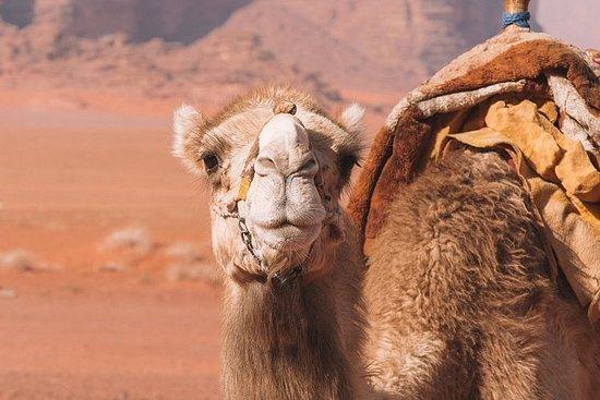Foto Sunset Excursion | Wadi Rum Desert