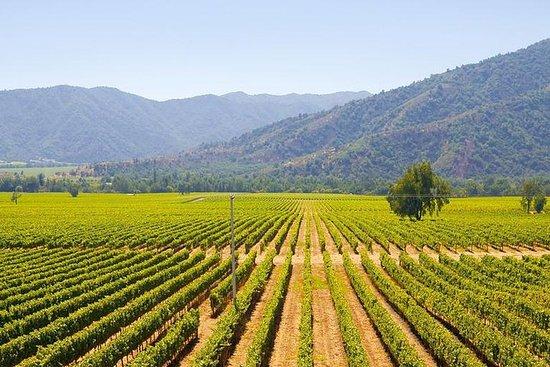 Colchagua Full Day Wine Tour: Casa Silva & L'Apostolle Vinprodusenter