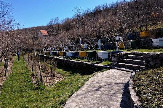 黑山的美食与观光-斯卡达尔湖和采蒂涅私人旅游