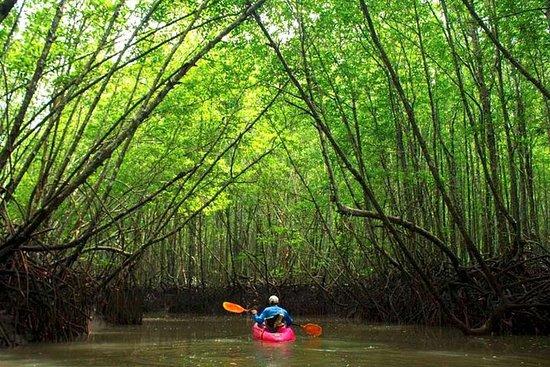 Kayak Tour in Lagoon, Canyon ...