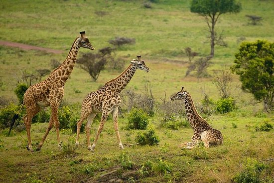 Arusha National Park Guided Day Tour...
