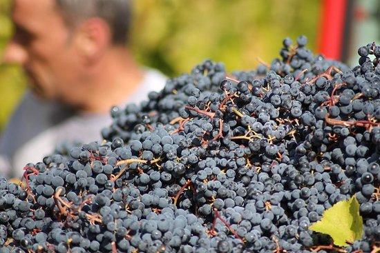 Vinsmakingopplevelse og funn nær Modena