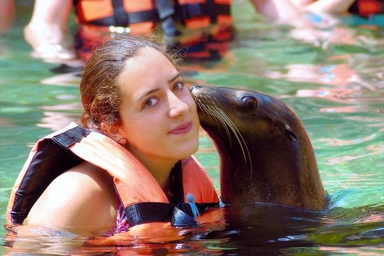 Adventure and adrenaline, swimming with SEA LIONS! & visit the Peruvian islands! – fénykép