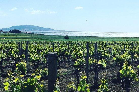 Excursion viticole d'une journée à Sète avec déjeuner