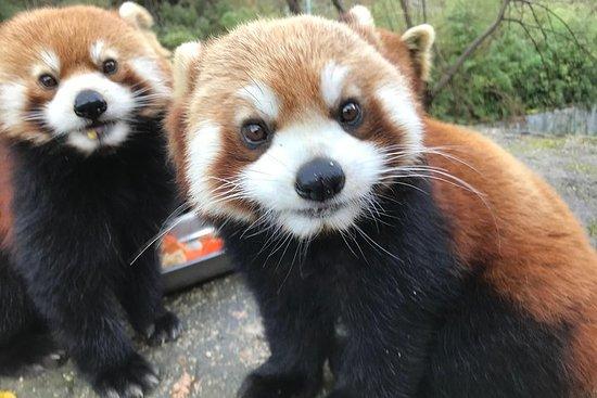 Visite privée d'une bénévole du Panda...