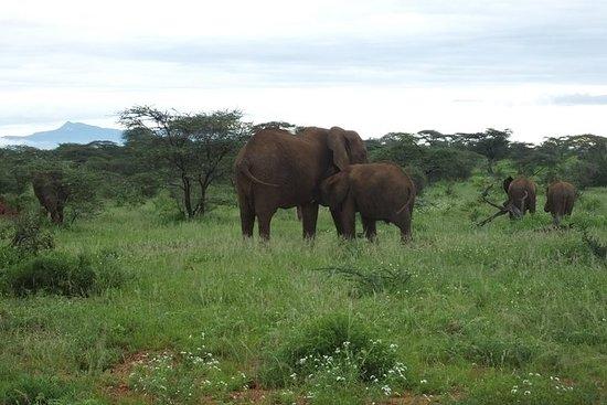 3 dagar Samburu Safari