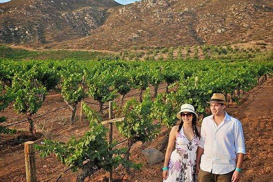 瓜达卢佩葡萄酒之旅谷