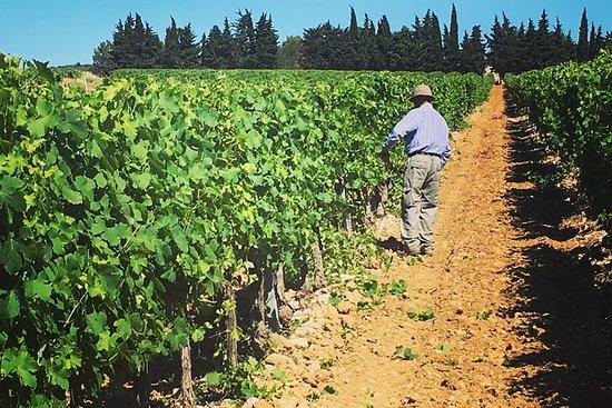 Tour enologico della Languedoc per piccoli gruppi di mezza giornata